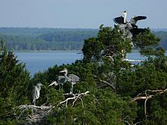 Владыки селигерских крон. Фото - Вилкочинскас Богуслав Богуславович